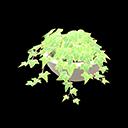 Edera in vaso (Verde chiaro)