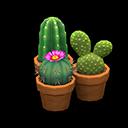 Set di mini cactus