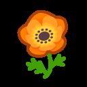 Anemone arancione