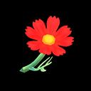 Cosmea rossa