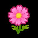 Cosmea rosa