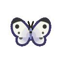 Farfalla comune