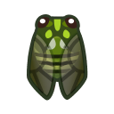 Cicala robusta