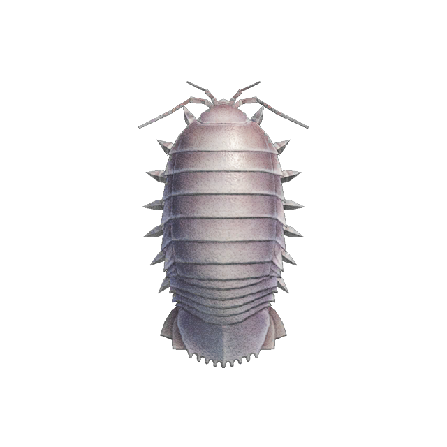 Isopode gigante