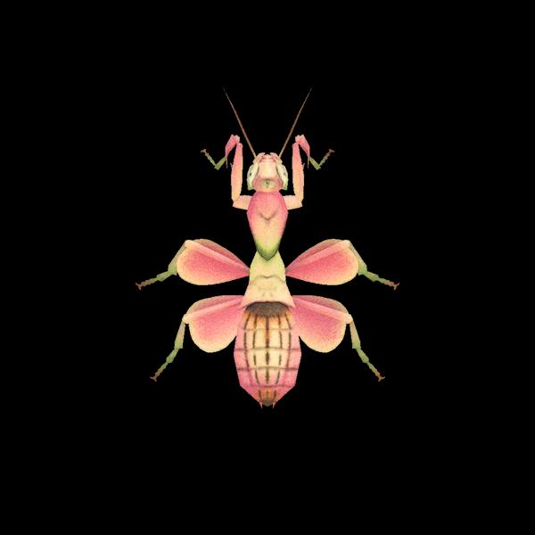 Mantide orchidea