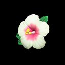 Molletta ibisco (Bianco)