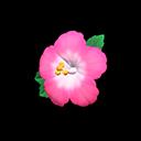 Molletta ibisco (Rosa)