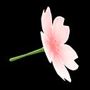 Ombrello fiore di ciliegio