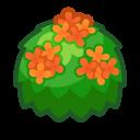 Osmanto arancio adulto