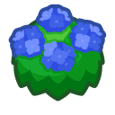 Ortensia blu adulta