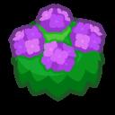 Ortensia viola adulta